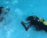 pool-session-tauchen-bodensee-03